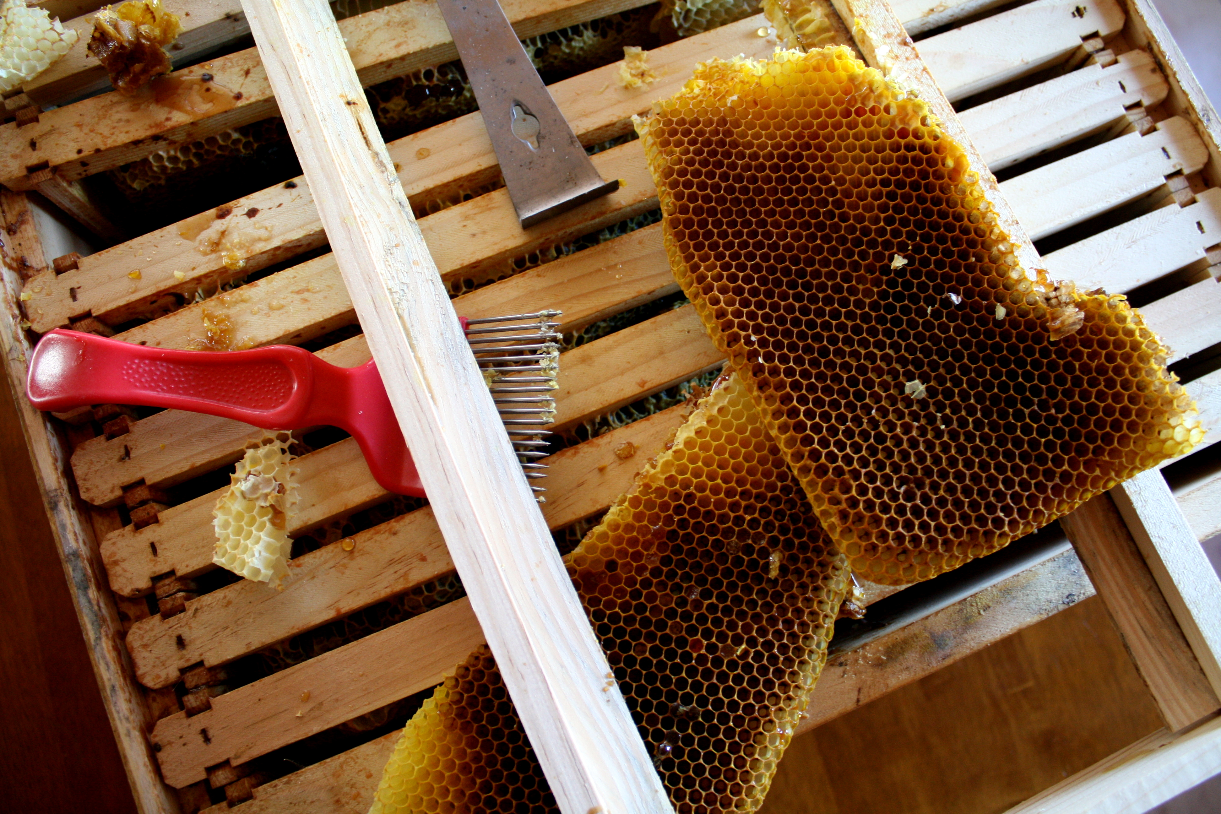 decontructed bee hive