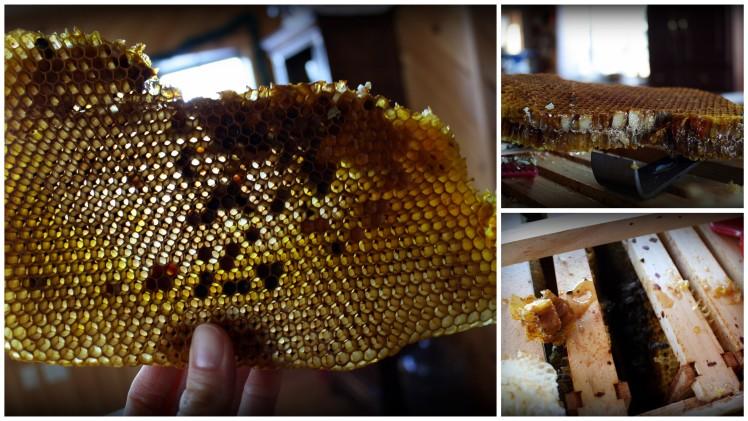 honeycomb-002
